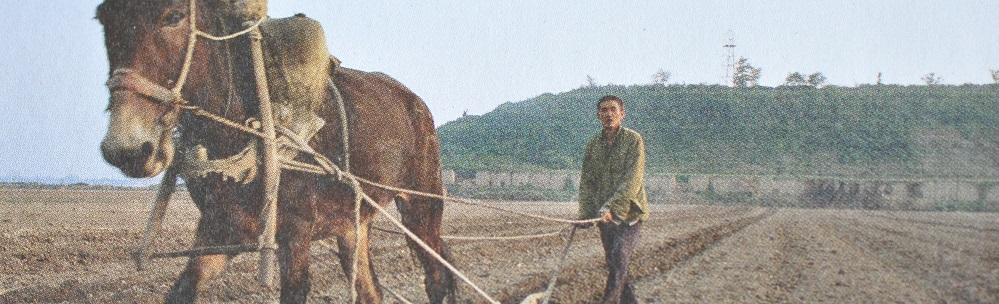 Paard akkerbouw